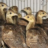 特种动物养殖专业
